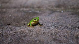 フロッシュ(Frosch)の語源・由来・意味
