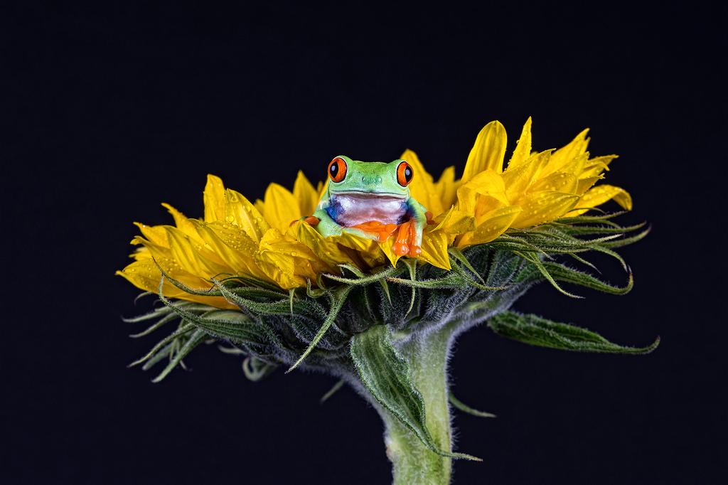 カエルと花